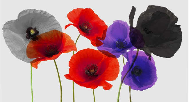 Anzac Day 2021 Image