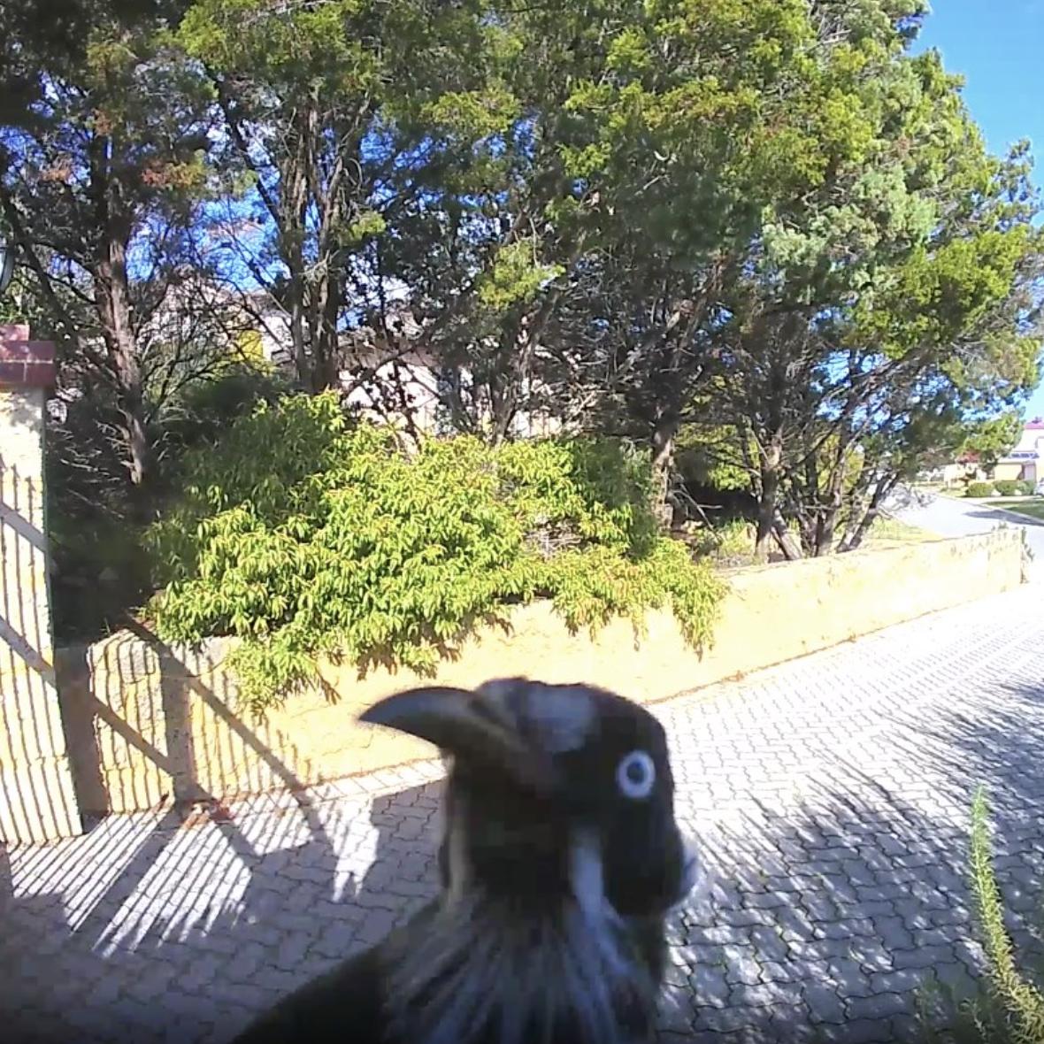*Doorbell rang* …Who dis? Image